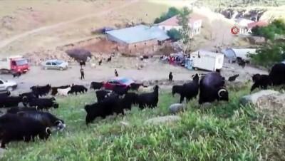 Bingöllü çobana Malatya'dan rakip...Çıkardığı farklı seslerle koyunlarını saniyeler içinde etrafına topluyor