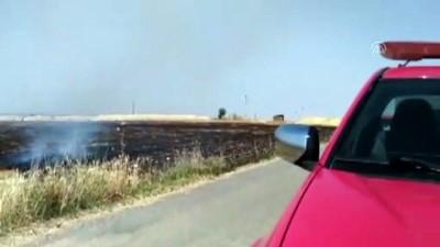 Anız ateşi buğday tarlasını yaktı - ŞANLIURFA