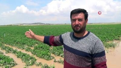 gubre -  Patates tarlaları sular altında kaldı
