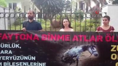 elektrik kablosu -  Büyükada'da 9 atın yandığı ahırın sahibi hakim karşısına çıktı