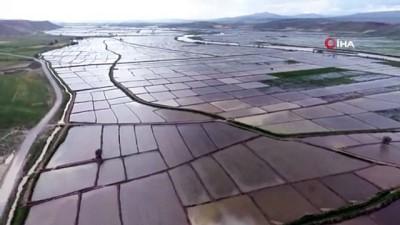 cekim -  Beyaz altın tarlaları havadan görüntülendi