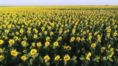 'Sarı gelin'in uyanışı büyülüyor - KIRKLARELİ