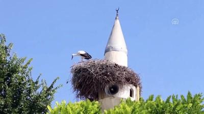 Çifte minare leyleklerin yuvası oldu - IĞDIR
