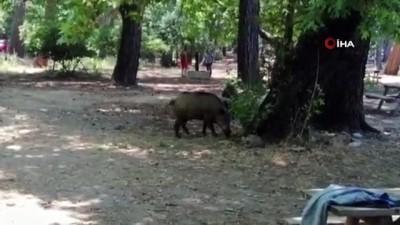 Milli park sınırları içerisinde hayvan beslenmesi yasaklandı