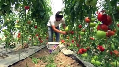 gubre -  Genç çiftçinin kurduğu sera, hayatının dönüm noktası oldu