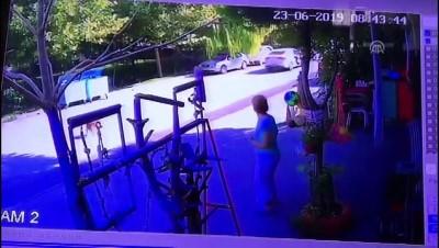 market - Köpeğe otomobilin çarpması güvenlik kamerasında - DENİZLİ