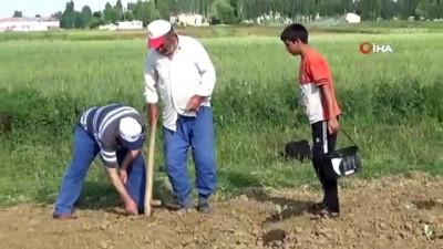 nadan -  Muş'ta lahana ekimine başlandı