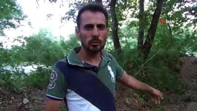 orman mudurlugu -  Bursa'da hayvan katliamı...Kurtlardan kurtulmak isterken köpekleri zehirledi