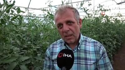 Tokat domatesi tarlada sezonu 1.70 liradan açtı