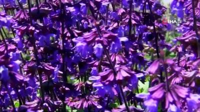 fotograf studyosu -  Van Gölü kıyısında rengarenk tıbbi bitkiler bahçesi