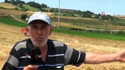 gubre -  Bafra Ovası'nda buğday hasadı başladı