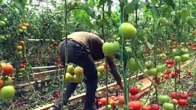 Kurduğu serayla mevsimlik işçilere umut oldu - ŞIRNAK