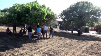 tarim arazisi - Arazi yangını ahıra sıçradı, 53 koyun telef oldu - ÇANAKKALE
