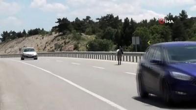 ormanli -  Karayolundaki eşek sürücülere zor anlar yaşattı