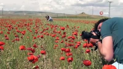 Süphan dağı ve gelincik çiçeklerinin muhteşem manzarası böyle görüntülendi
