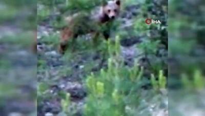 ormanli -  Yol kenarında gördüğü ayıyı 'Gel oğlum' diye böyle çağırdı