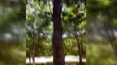 ormanli -  Havada duran ağaç görenleri şaşkına çeviriyor