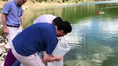 Tokat'ta 13 gölete 70 bin sazan yavrusu bırakıldı