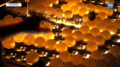 argo - Irak'ın Yumurta Ambargosu Üreticiyi İflasın Eşiğine Getirdi