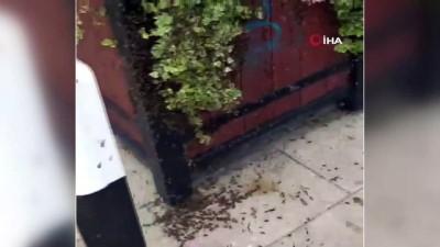 - İrlanda'da Arılar Paniğe Neden Oldu