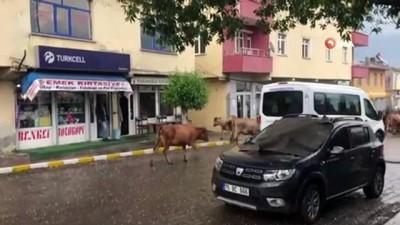 Ardahan'da dolu...Fındık büyüklüğündeki dolu tarım arazilerine ve araçlarda hasara neden oldu