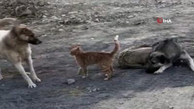 Köpek ile kedinin oyunu kamerada