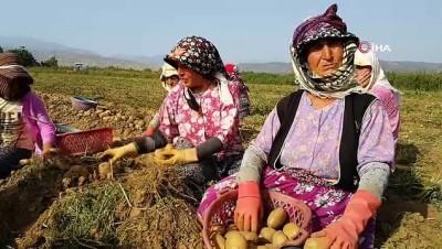 Patates üreticisi ithalattan dolayı sıkıntıda