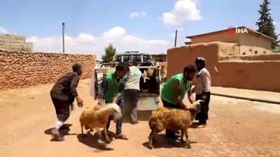 - Yetim ailelere canlı hayvan desteği