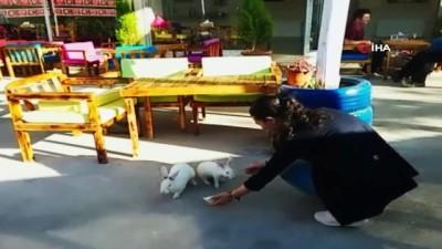Sıcaktan bunalan tavşanların dondurma keyfi