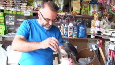 Yuvasından düşen karga yavrusu 'Abdi'yi 3 aydır elleriyle besliyor