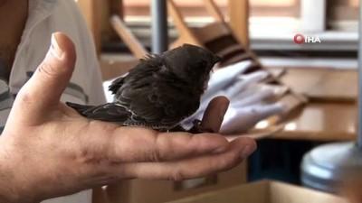 Beyoğlu'nda sokakta Ebabil kuşu bulundu