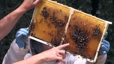 'Tarım ilaçları, arıların çiçek tercihini değiştirebiliyor' - BURSA