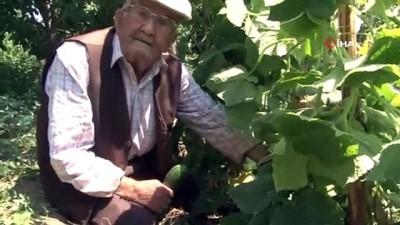 yasli adam - Bu tarladaki sebze ve meyveler 22 yıldır ücretsiz