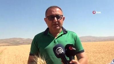 kirikli -  Kuraklık buğday verimini yüzde 60 düşürdü