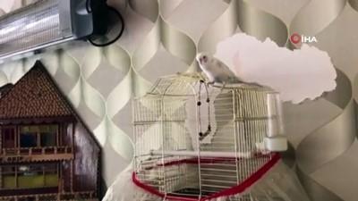 hayvan sevgisi -  Muhabbet kuşuyla 'zaza'ca muhabbet