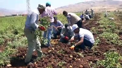 Siirtli çiftçilerin 'alternatif ürün'ü patates olacak - SİİRT