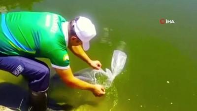 Göl ve göletlere 5,1 milyon yavru balık bırakılacak