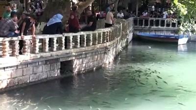 Sıcaktan bunalan vatandaşlar parklarda serinliyor - ŞANLIURFA