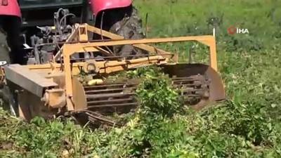 asad -  Niğde'de turfanda patates hasadı başladı