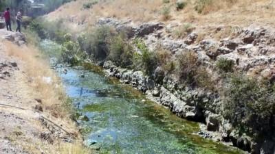 Çalışma nedeniyle suyu kesilen kanaldaki balıklar telef oldu - MARDİN