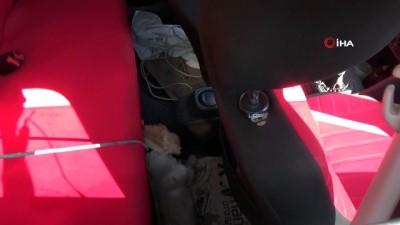 Düzce'de otomobil içine bırakılan köpek sıcaktan ve bağlı olduğu ipe dolanıp öldü