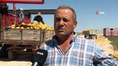 helal -  Konya Ovası'nda kavun hasadı havadan görüntülendi