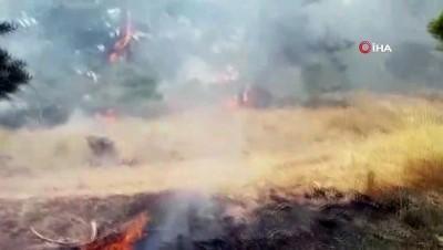 Yozgat'ta orman yangını: 3 hektar alan yandı
