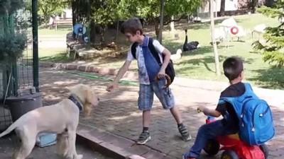 hayvan sevgisi -  Bakan çağrıda bulundu, eğitim merkezi hayvanat bahçesine döndü