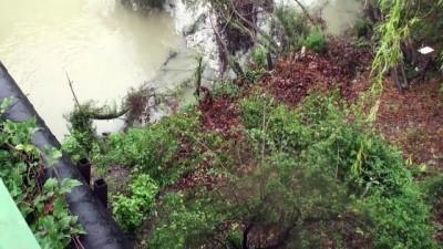 Bartın Irmağı'nda balık ölümleri - BARTIN