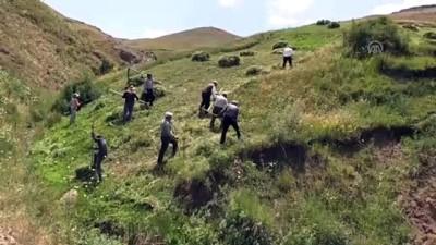 Hayvanları için imece usulüyle dağlardaki otları biçiyorlar - AĞRI
