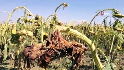 tarim arazisi -  Aksaray'da 10 bin dekar ekili tarım arazisini dolu vurdu