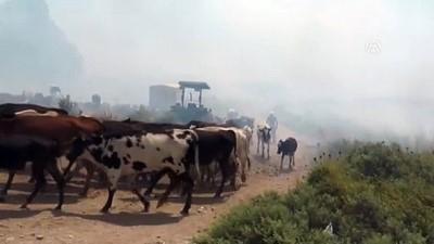 buyukbas hayvanlar - Anız yangınının ortasında mahsur kaldılar - HATAY