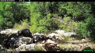 yaz gunleri - DKMP'den yaban hayvanlarına su takviyesi - ANKARA
