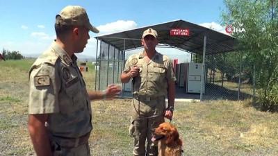 Hayat kurtaran köpekler 16 aylık eğitimden geçiriliyor